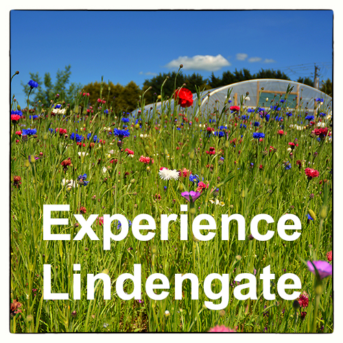 More about the Lindengate charity in Wendover, South East England