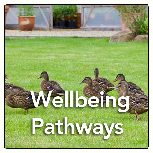 Wellbeing Pathways